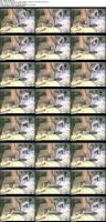 10965366_doggy-style_s.jpg